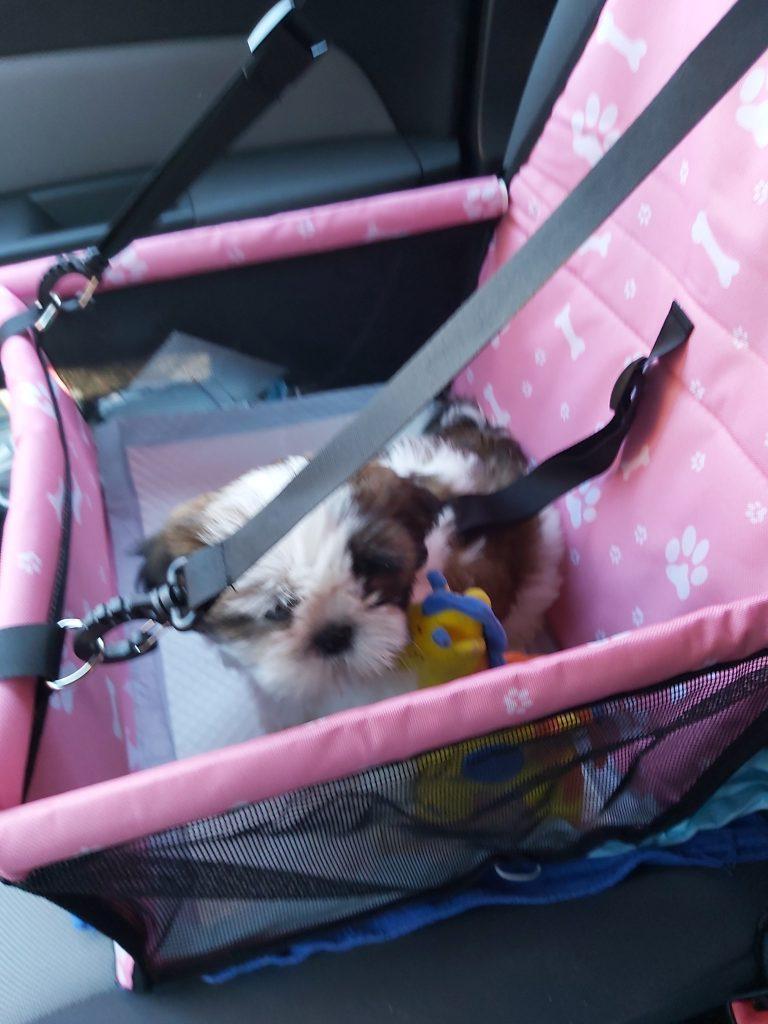 Avto sedež za varno prevažanje psa ali mačka BOXI photo review